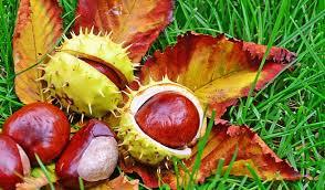 Podzimní sběr kaštanů